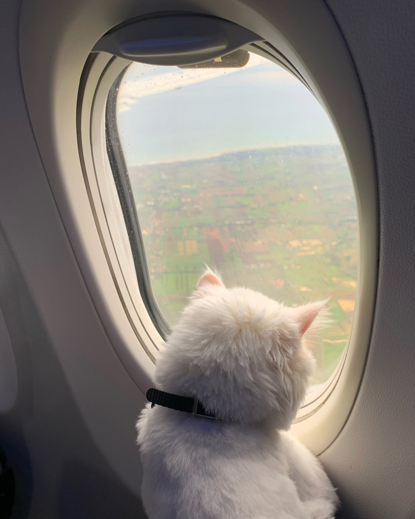 Leo's First Air Travel